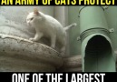 An Army Of Cats Protect One Of The Largest Museums in The World