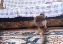 Anasını tavuk şiş yaptığım - Mehmetolcay Kafali
