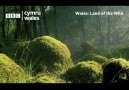 And breathe. Relax with the sound of pure Welsh nature. BBC Cymru Wales