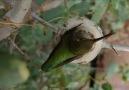 Animal Homes: The Nest