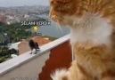 Ankara Paylaşım - Kedi ile Karganın kavgası