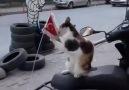 Ankara Trafik - Kedilere nankör derken bir daha düşünün .