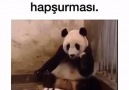 Annesinin aklını alan yavru panda D