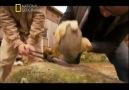 Antik Sırlar-Sfenks 3-4 ( Belgesel Videolar )
