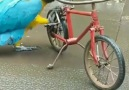 A parrot that can ride a bicycle.