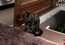 Arkadaşına Komplo Kuran Kedi