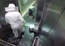 Asansörde arı şakası
