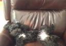 aşırı heyecanlı köpek :)))