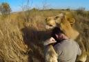 Aslanların Dostu: Kevin Richardson