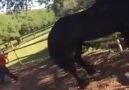 Atın İntikamı - Güvenlik Sektörü