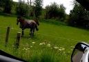 Atlı Video
