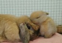 Aurora Borealis Observatory - Baby rabbits are incredibly affectionate