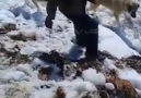 Avcılara ayı sürprizi