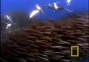 Avcılar ve Avları... ( Güzel bir video ) İzle ve Paylaş