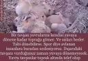 AVLANMAK BİR SPOR DEĞİLDİR !!!