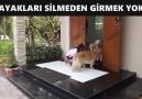 Ayak Silme Sırasına Giren Köpekler
