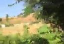Azrbaycan mahnısı il ermnilrin gzintisi