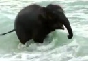 Baby elephant sees the sea for the first time!