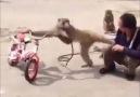 Bad Monkey!!