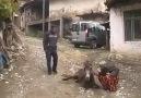 Balıkesir'de Azize nine'nin eşeği ile helalleşmesi  .Paylaş