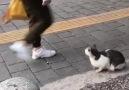 Balıkesirim - Piskopat kedi Facebook