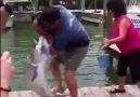 Balık güreşi