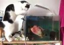 Balıklarda kafayı yedi sonunda
