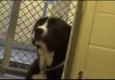 Barınakta kalan köpek, sahiplenince sevinçten havalara uçuyor :)