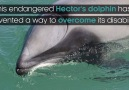 BBC Earth - Dolphin invents a new way to breathe Facebook