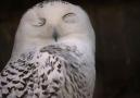 BBC News Türkçe - Hayvanların şaşırtıcı özellikleri