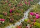 Beautiful & spacious flower mountains - Beautiful photo and video