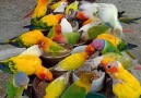 Beautiful birds - Murree News Official
