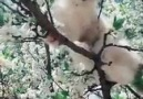 Beautiful cat in flowers tree - Beautiful photo and video