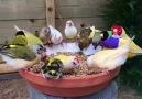 Beautiful finch birds