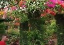 Beautiful garden flowers ! - Beautiful photo and video