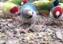 Beautiful golden birds