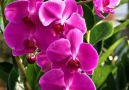 Beautiful Orchids - Beautiful Flowers and Roses