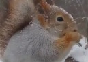 Beautiful photo and video - A squirrel in winter Facebook