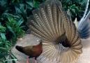 Beautiful Village - Beautiful Birds Couple in Love!!! Facebook