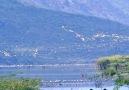 Beautiful Village - Such a Beautiful Flamingo Lake!!! Facebook