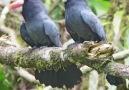 Beauty of Birds - So nice Lovely bird