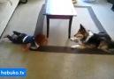 bebeği güldürmeye çalışan köpek