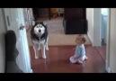 Bebekle köpeğin muhteşem anlaşması :))