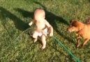 Bebekle köpeğin suyla oyunu :)