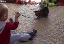Bebeklerle oynayan kedi ve köpek yavruları derlemesi