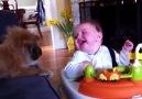 Bebekler ve Köpekler -)