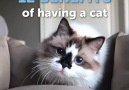 12 BENEFITS of having a cat