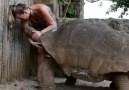 Biggest tortoise ever - Adorable Birds and animals