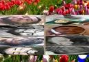 Bilal Furkan & Ebu Akil- Şehidler Ölmez ( Adminin Sectiği Nesheed