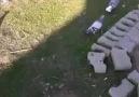 Bingöllü Fatih 35 sefer gök dişi eke taklacı oyun kuşu